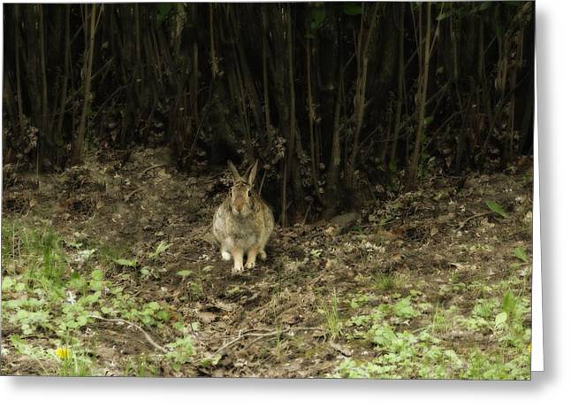 Hare Greeting Cards - Woodsy Rabbit Greeting Card by Gothicolors Donna Snyder