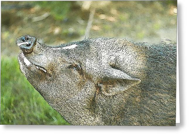 Hairy Pig Greeting Cards - Woody Smiles Greeting Card by Artist and Photographer Laura Wrede