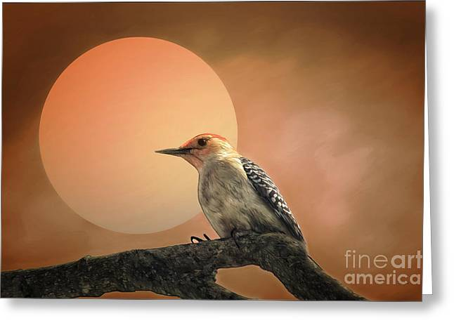 Outdoor Life Art Prints Greeting Cards - Woody Greeting Card by Tom York Images