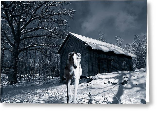 Sight Hound Greeting Cards - Woolf Like Hound In Cold Winter Landscape Greeting Card by Christian Lagereek