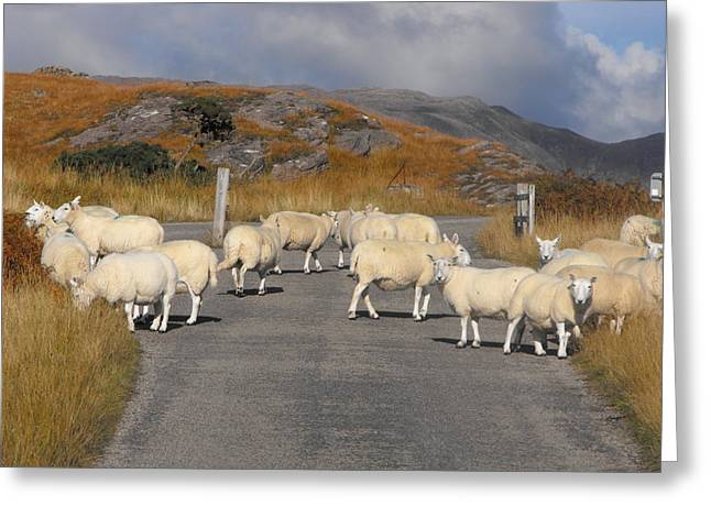 Roadblock Greeting Cards - Woolly Roadblock Greeting Card by Dean Stoker