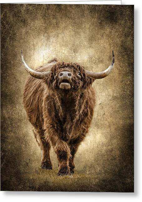 Bully Greeting Cards - Wooly Bully D2037 Greeting Card by Wes and Dotty Weber
