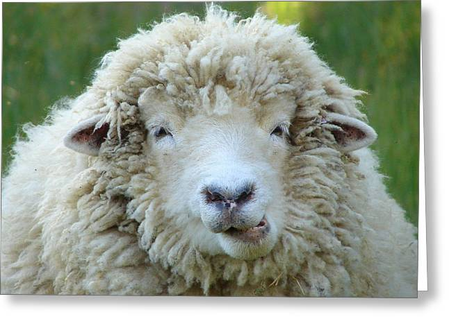 Contest Winner Greeting Cards - Wooly Sheep Greeting Card by Ramona Johnston