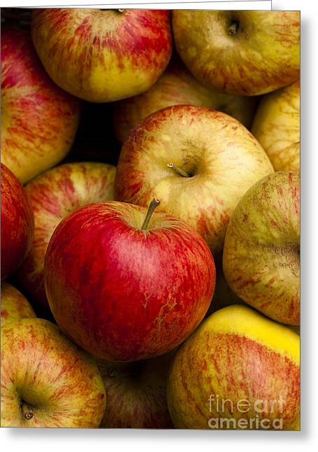 Warm Tones Greeting Cards - Worcester Pearmain Greeting Card by Anne Gilbert