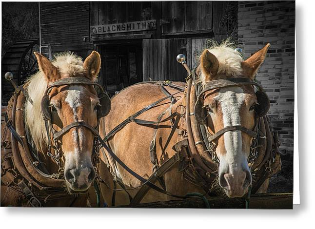 Equine Art Work Greeting Cards - Work Horses Greeting Card by Randall Nyhof