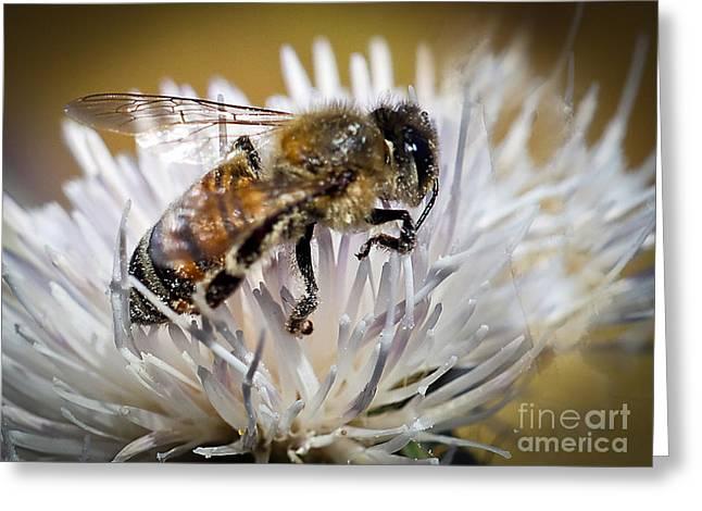 Stinger Greeting Cards - Worker Greeting Card by Robert Bales