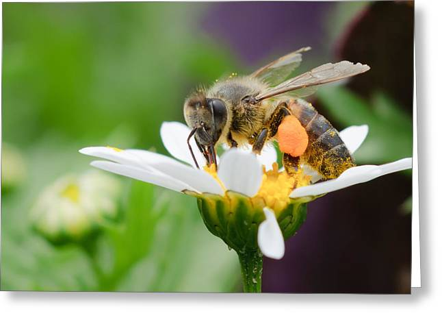 Flower Greeting Cards - Working Bee Greeting Card by Ivelin Donchev