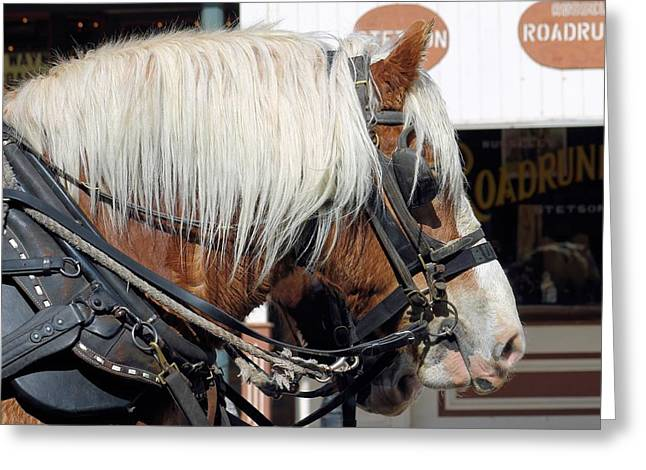 Horse Pulling Wagon Greeting Cards - Working Horse Greeting Card by G Berry