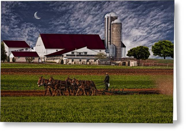 Amish Farm Greeting Cards - Working The Fields Greeting Card by Susan Candelario