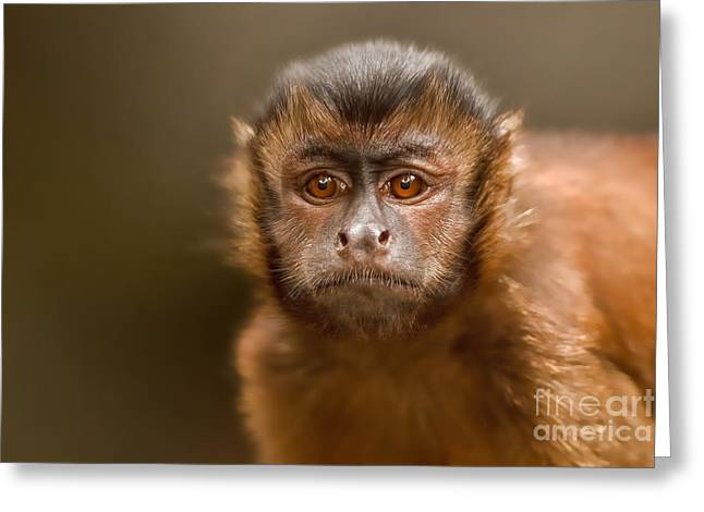 New Thoughts Greeting Cards - World of My Own Greeting Card by Ashley Vincent