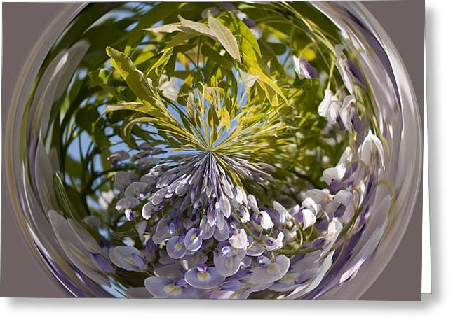 World Of Wisteria Greeting Card by Anne Gilbert