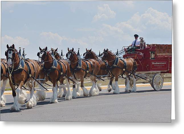 Team Greeting Cards - World Renown Clydesdales 2 Greeting Card by Kae Cheatham