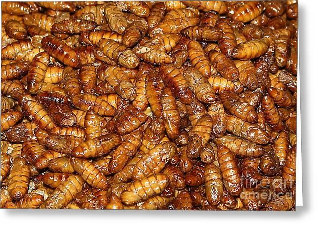 U.s.s. Pyrography Greeting Cards - Worms larvae Greeting Card by Yury Bashkin