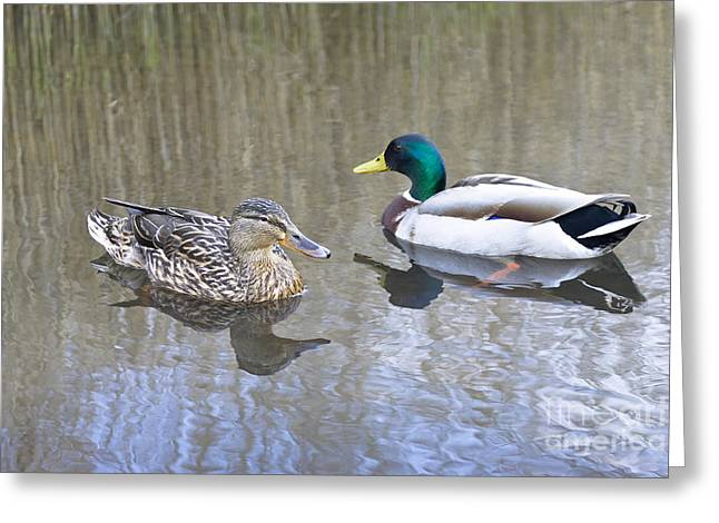 Anatinae Greeting Cards - Would you like to dance mallard? Greeting Card by M and J Bloomfield