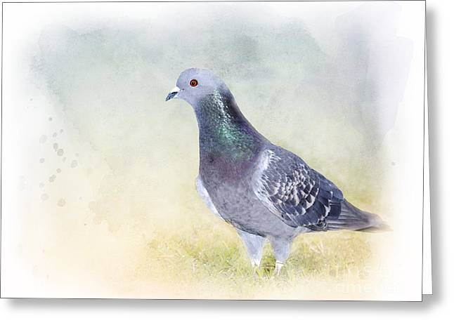 Feral Pigeon Greeting Cards - Would You Love Me Too? Greeting Card by Betty LaRue