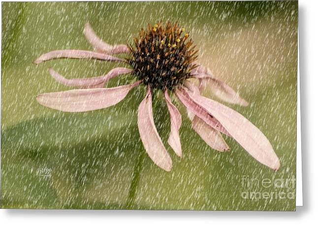 Cone Flowers Greeting Cards - Wouldnt It Be Loverly Greeting Card by Lois Bryan