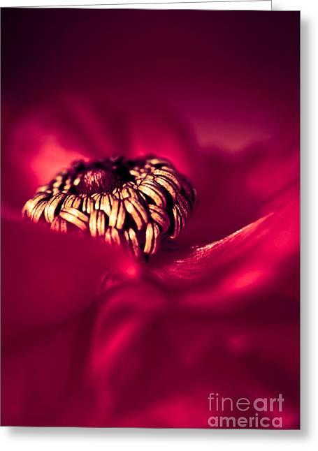 Wrap Me In Red Greeting Card by Jan Bickerton