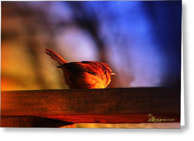 Wren In Early Morning's Light - Featured In In Newbies-nature Wildlife- Comfortable Art Groups Greeting Card by EricaMaxine  Price