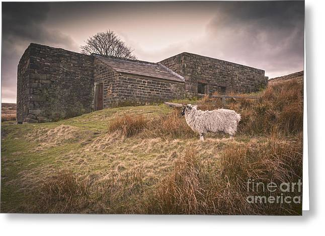 Height Greeting Cards - Wuthering Heights Greeting Card by Colin and Linda McKie