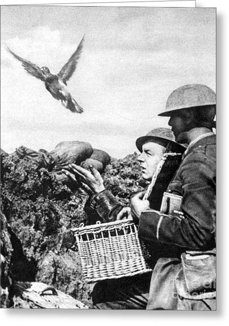 Western Front Greeting Cards - Wwi Releasing British Carrier Pigeon Greeting Card by Photo Researchers