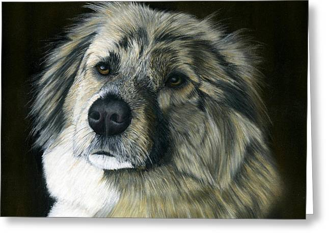 Shepherds Pastels Greeting Cards - Wylie Rescued from Afghanistan Greeting Card by Sarah Dowson