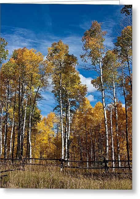 Blue Subaru Greeting Cards - Wyoming Golden Fall Aspens Greeting Card by John Haldane