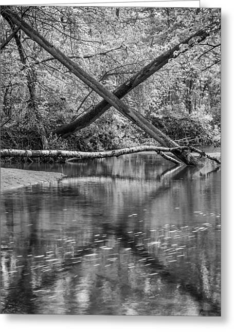 Petrifying Springs Greeting Cards - X Marks the Spot in the River Greeting Card by Chris Tobias