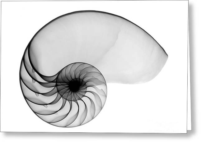 Radiograph Greeting Cards - X-ray Of Nautilus Greeting Card by Bert Myers