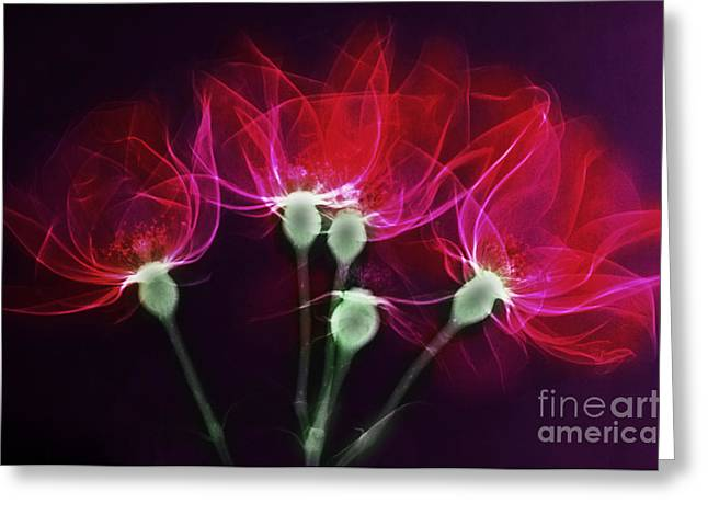 Color Enhanced Greeting Cards - X-ray Of Roses Greeting Card by Scott Camazine
