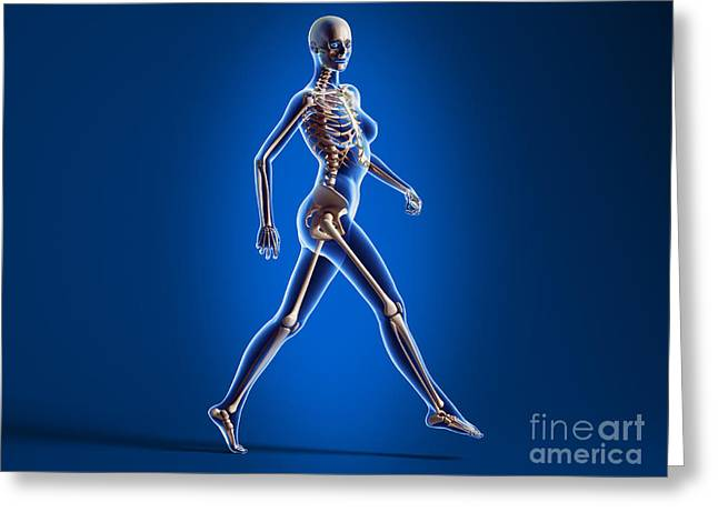 Costae Fluitantes Greeting Cards - X-ray View Of A Naked Woman Walking Greeting Card by Leonello Calvetti