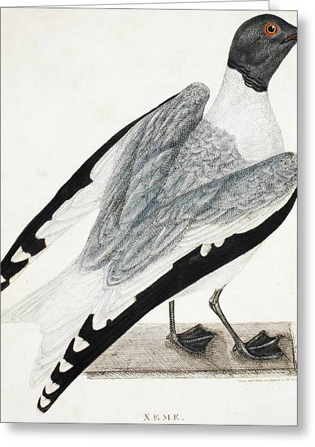 Gray Bird Greeting Cards - Xeme Greeting Card by Thomas Lewin