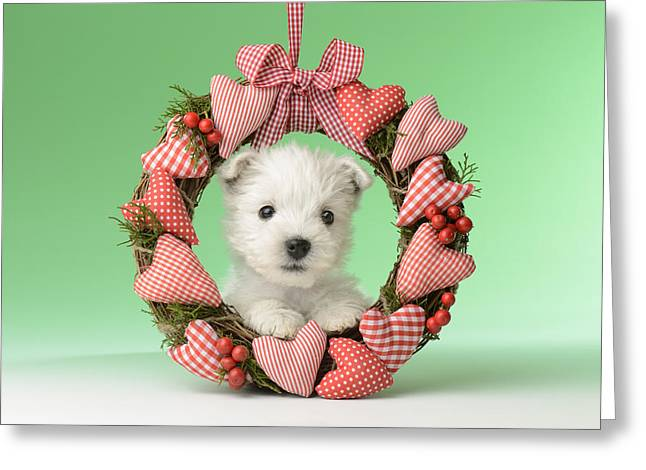 Westie Greeting Cards - Xmas Reef Puppy Greeting Card by Greg Cuddiford