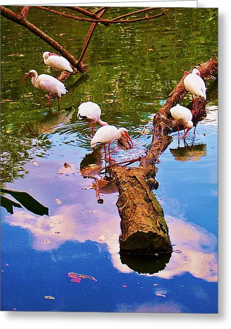 Fed Greeting Cards - Y Birds Greeting Card by Chuck  Hicks