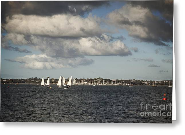 Yacht Photographs Greeting Cards - Yachts Waitemata Harbour Auckland New Zealand Greeting Card by Colin and Linda McKie
