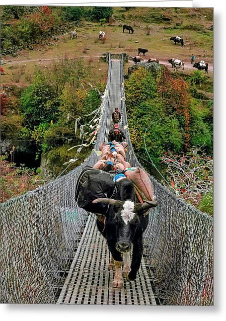 Yaks On Rope Bridge Greeting Card by Babak Tafreshi