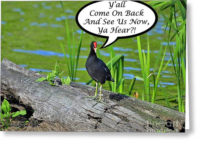 Humorous Greeting Cards Greeting Cards - Yall Come Back Moorhen Card Greeting Card by Al Powell Photography USA