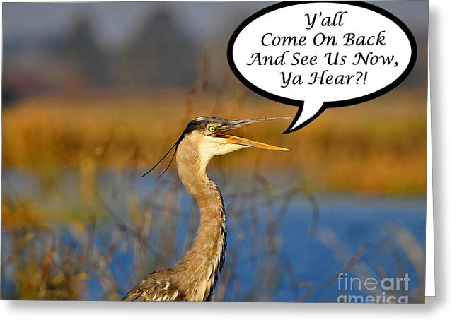Gray Heron Greeting Cards - Yall Come On Back Heron Card Greeting Card by Al Powell Photography USA