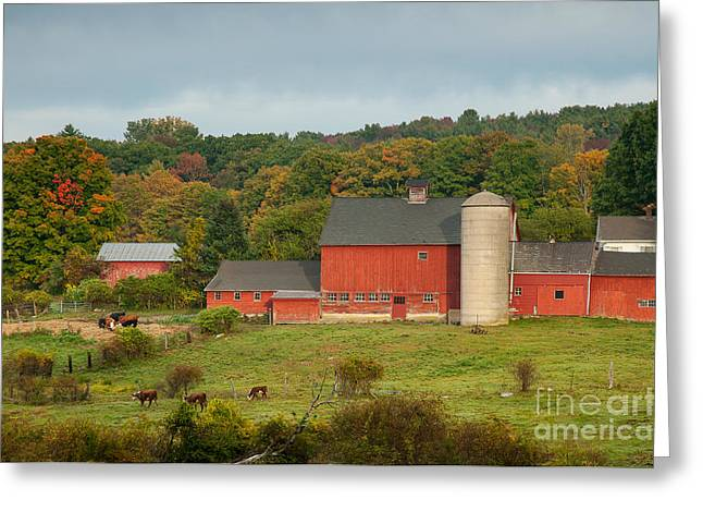 Pastureland Greeting Cards - Yankee Farmlands No 14 Greeting Card by JG Coleman