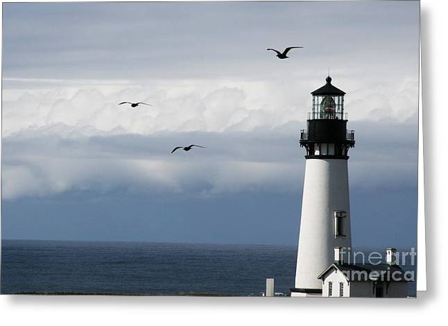 Yaquina Head Flyers Fifty Three Greeting Card by Donald Sewell