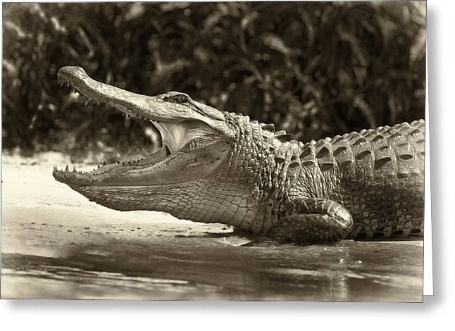 American Alligator Greeting Cards - Yawn Greeting Card by Patrick M Lynch