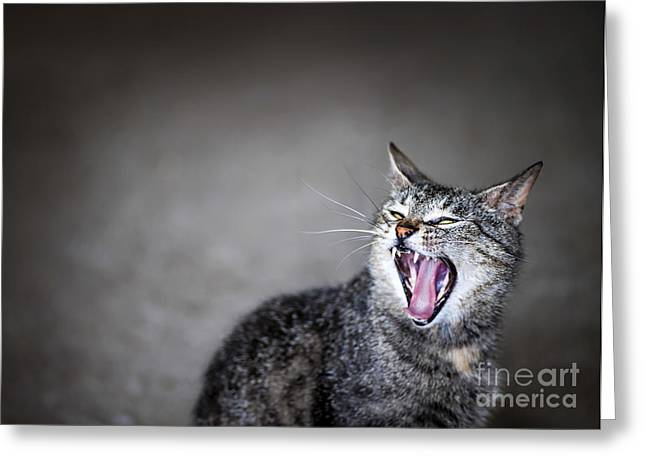 Sleepy Greeting Cards - Yawning cat Greeting Card by Elena Elisseeva