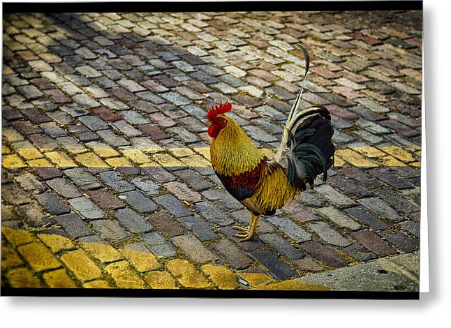 Street Pyrography Greeting Cards - Ybor Alpha Rooster Greeting Card by Shawn Bussey