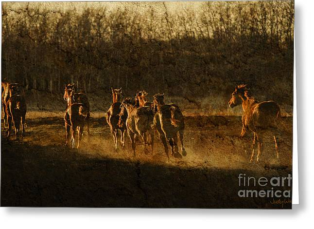 Yearling Horse Greeting Cards - Yearling Flight Greeting Card by Judy Wood