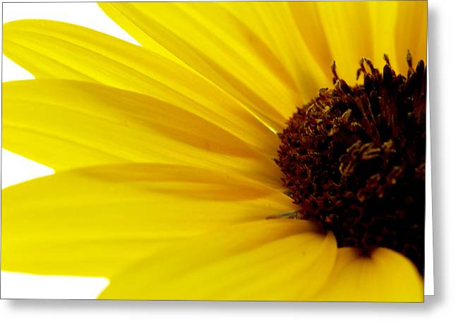 Becky Greeting Cards - #yellow#5 Greeting Card by Becky Furgason