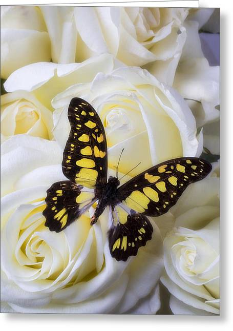 Vibrant Photographs Greeting Cards - Yellow and black butterfly Greeting Card by Garry Gay