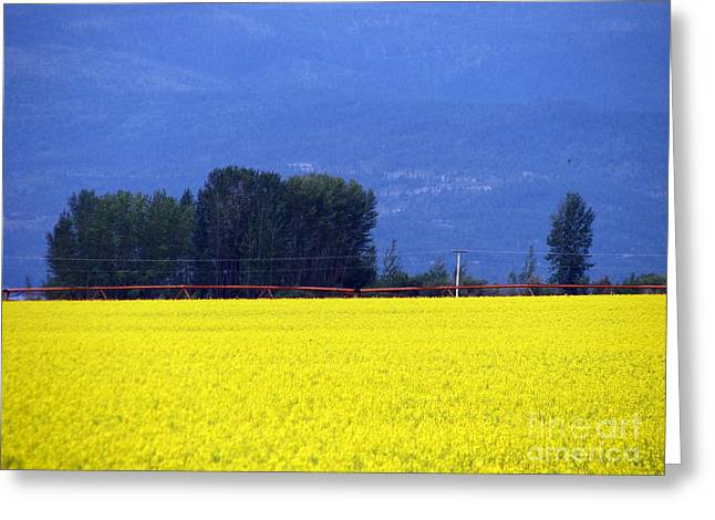 Yellow And Blue Greeting Card by John Potts