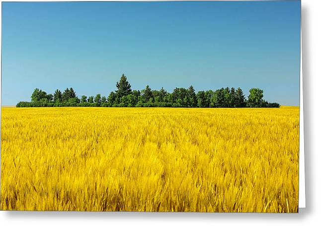Surreal Landscape Greeting Cards - Yellow and Blue Make Green Greeting Card by Todd Klassy