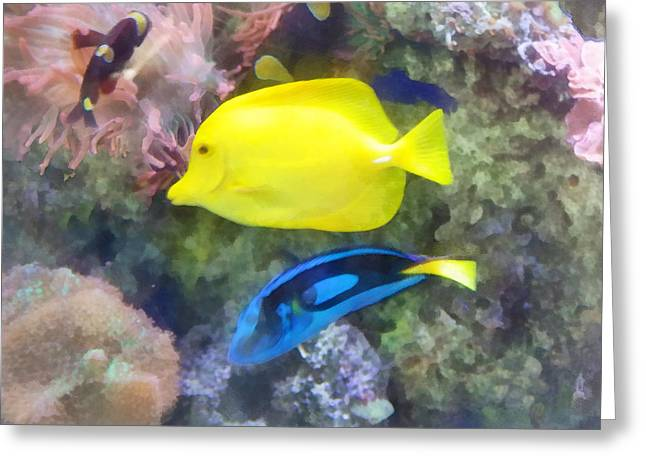 Fish Greeting Cards - Yellow and Blue Tang Fish Greeting Card by Susan Savad