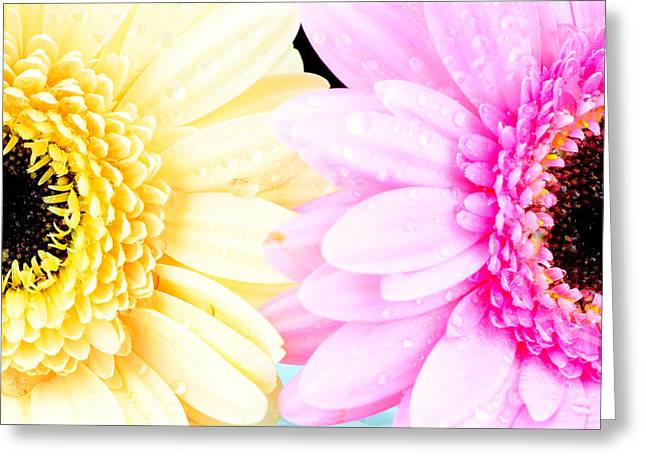 Single Mixed Media Greeting Cards - Yellow and pink daisy  Greeting Card by Toppart Sweden
