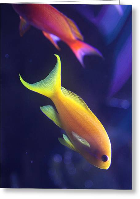 Underwater Photos Greeting Cards - Yellow and Pink Fish Greeting Card by Donna Corless